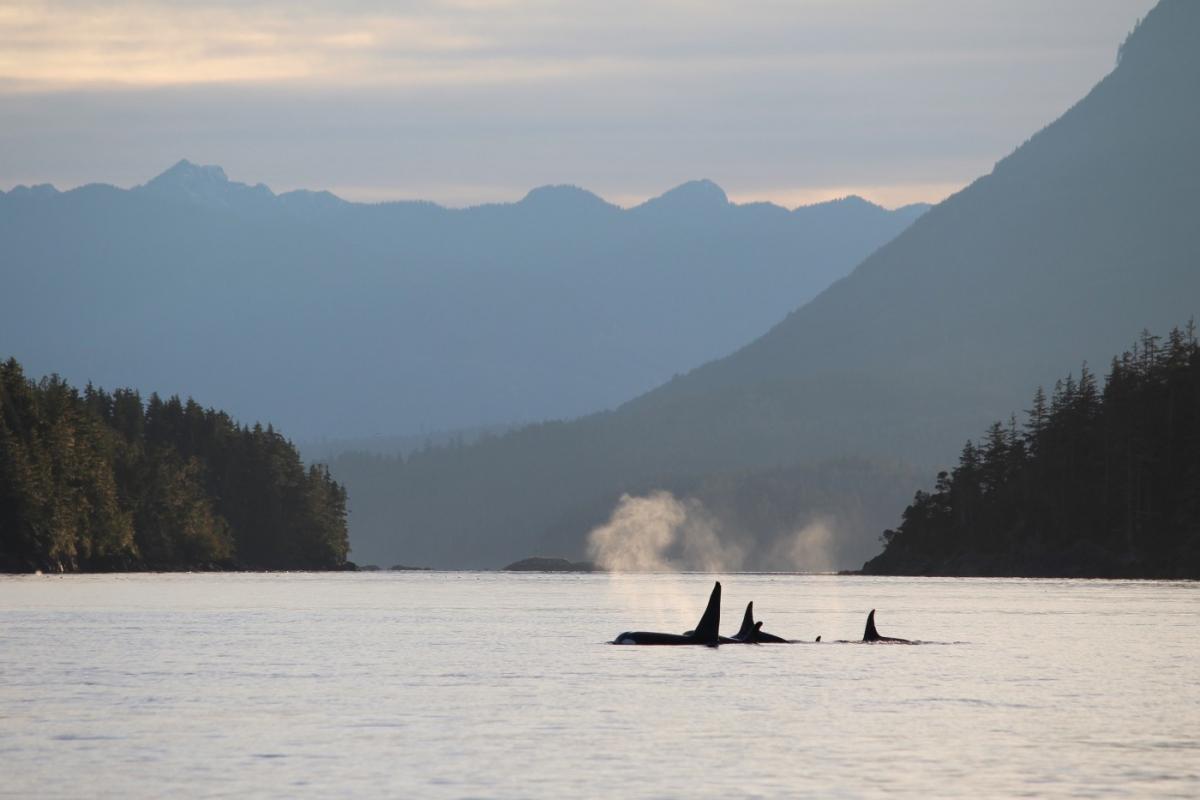 orca-vista