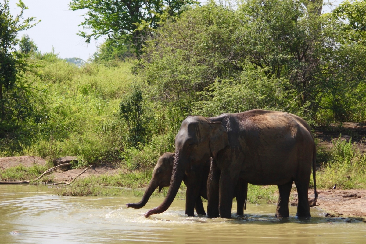 eco-team-safari