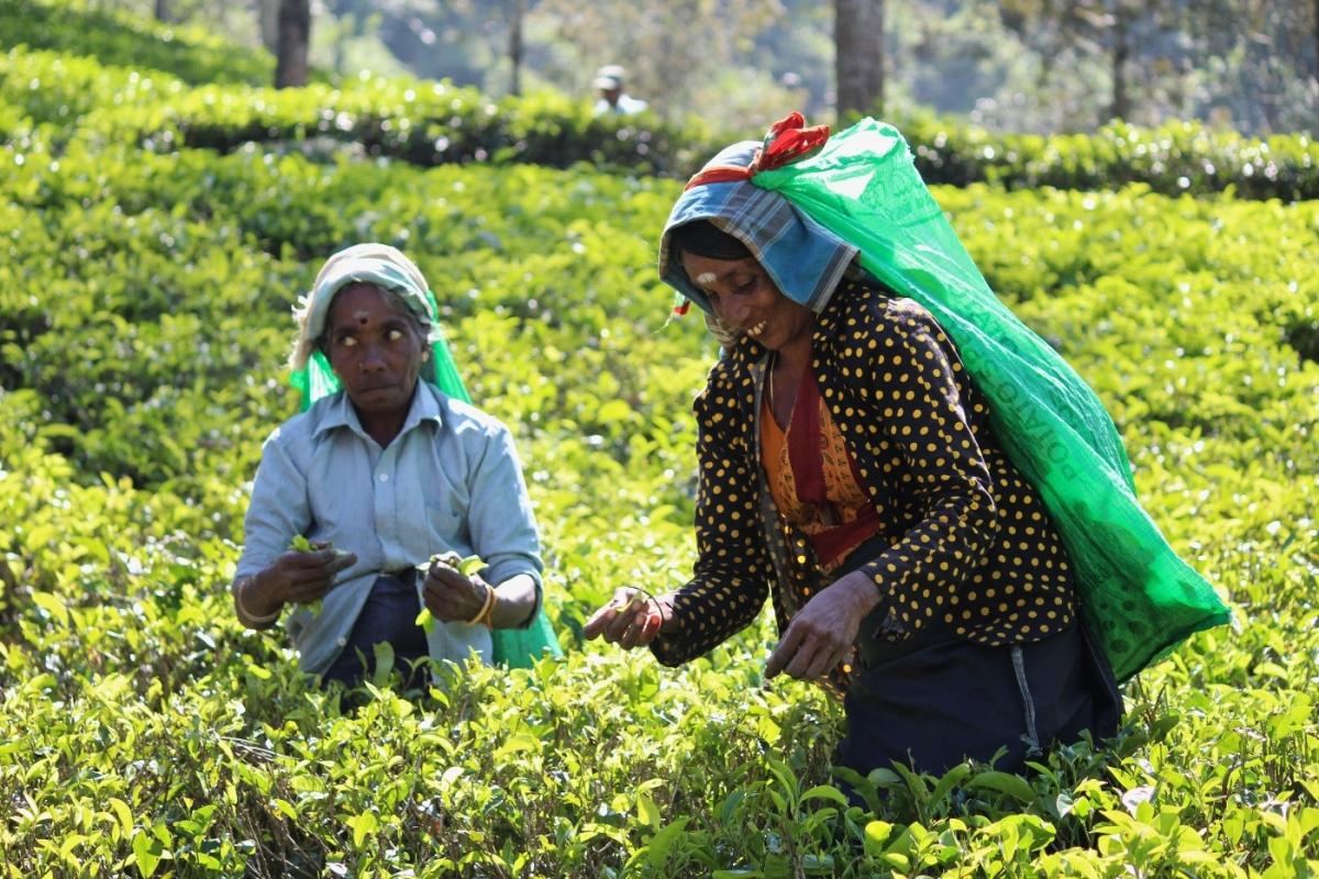 women-in-fields